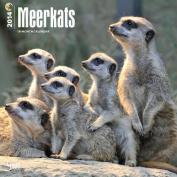 Meerkats 2014 Wall Calendar