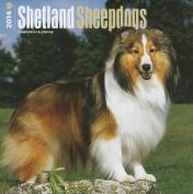 Shetland Sheepdogs 2014 Wall Calendar