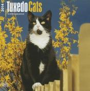 Tuxedo Cats 2014 Wall Calendar
