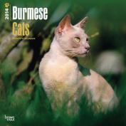 Burmese Cats 2014 Wall Calendar