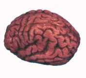 Fake Human Bloody Brain