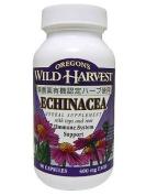 Oregon's Wild Harvest Echinacea