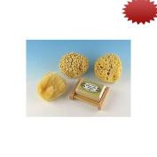 Natural Sea Sponge Sampler