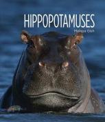 Hippopotamuses (Living Wild