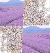 Lavender Flower Buds # 1 - Super Extra Premium Botanical Grade - WEDDING favours, SACHETS, SOAP MAKING, POTPOURRI, BATH TEA - Brought To You By Oakland Gardens