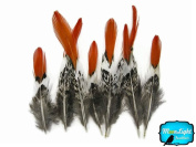 Pheasant Feathers, Lady Amherst Pheasant Feathers - Short Natural Orange Tips Lady Amherst Pheasant Feather - 4 Feathers