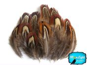 Pheasant Feathers, Ringneck Pheasant Feathers - Natural Almond Ringneck Pheasant Plumage Feathers - 5ml