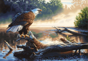 "Paint By Number Kit 50cm X14""-Eagle Hunter"