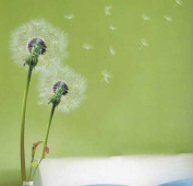 Stylish Flying Dandelion Stylish Grass Wall Stickers Home/Room Decors Mural Art Decals Adhesive Decorative Transparent