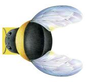 Little Bee: Mini Creatures