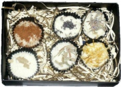 Fentons of Kent Handmade Natural Bath Melts made using essential oils - Assorted Box of 6