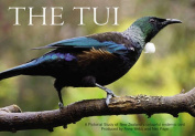 The Tui