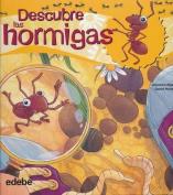 Descubre Las Hormigas [Spanish]