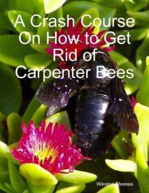 How To Get Rid Of Carpenter Bees Lookup Beforebuying