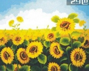 W & Hstore 13417 DIY Paint By Number Kit,sunflower,50cm x 41cm