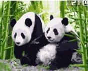 W & Hstore 13422 DIY Paint By Number Kit,Panda,50cm x 41cm