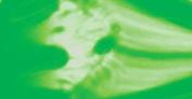 Art Noise Acrylic Paint - 1000ml - Fluor Green