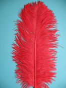1 Pc Ostrich Feather Plume 46cm - 60cm (Top Quality) - RED
