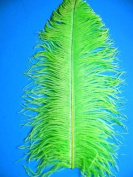 1 Pc Ostrich Feather Plume 46cm - 60cm (Top Quality) - LIME GREEN