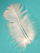 30 Pcs Turkey Plumage Feathers 5.1cm - 13cm - WHITE