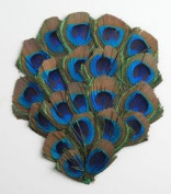 1 Peacock Feather Pad - Peacock EYE