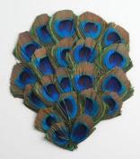 1 Peacock Feather Pad - Peacock EYE