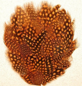 6 Pcs Guinea Pheasant Feather Pads - ORANGE