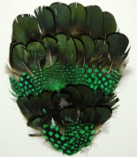6 Pcs Dyed Guinea w/ Natural Black Pheasant Pads - KELLY GREEN Feathers