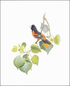 Northern Oriole Paper Tole 3D Kit 8x10