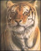 Tiger Paper Tole 3D Kit 8x10