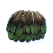 20 Pcs Green Lady Amherst Bronze Iridescent Plumage Feathers inches long 3.8cm - 7.6cm