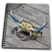 Taiche - Photography - Crab - Blue Crab - marine, creature, animal, animals, wildlife, ocean, invertebrate, blue, crab, seafood - Drawing Book