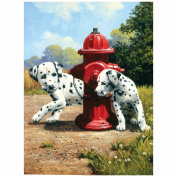 Junior Small Paint By Number Kit 22cm x 30cm -Peek-A-Boo