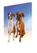 2 Boxers Dog Canvas