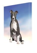 American Staffordshire Dog Canvas