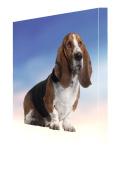 Basset Hound Dog Canvas