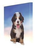 Bernese Mountain Puppy Dog Canvas