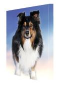 Black Tri Australian Shepherd Dog Canvas