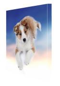 Border Collie Puppy Dog Canvas