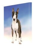 Bull Terrier Dog Canvas