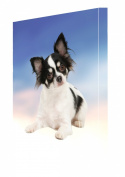 Chihuahua Dog Canvas