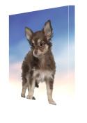 Chihuahua Puppy Dog Canvas