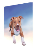 Pit Bull Dog Canvas