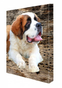 Saint Bernard Canvas 16 x 20