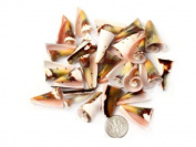 15X25mm Flower Shape Sea Shell Beads 20 Pcs Jewellery Making Beads