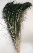 50 Pcs Peacock Swords Natural Feathers 80cm - 90cm