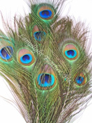 Short Peacock Eyed Feathers, Natural, Medium to Large Eyes,20cm - 38cm , Per 100