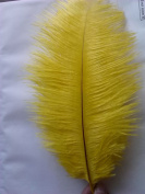 12 Kinds of Colour New Style Real Natural 10-30cm Ostrich Feathers Great Decorations