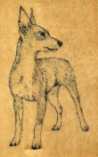 MINIATURE PINSCHER Rubber Stamp