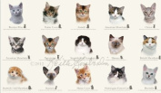 Elizabeth's Studio Cat Breeds Quilt Fabric 60cm x 110cm Panel